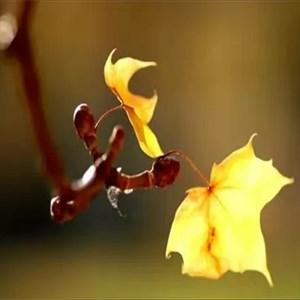 Ảnh của Thơ Tình: Chiếc lá cuối mùa thu